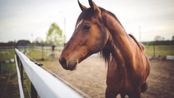 Pillemadsen forhandler et stort udvalg af træbriketter og Pavo hestefoder i høj kvalitet