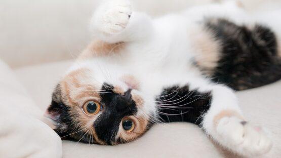 Online forhandler af Kalm kosttilskud til kat og hundesnore i høj kvalitet