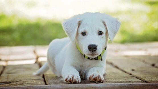 Find et godt udvalg af hundegodbidder og tørredækken i høj kvalitet hos CanisVitae