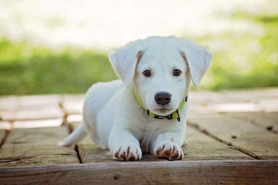 Hos Dyrlægens Gård finder du alt fra Diapaste til hundekurve