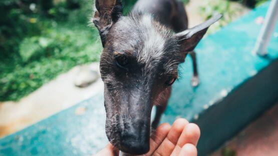 Find hvalpepakker og kornfri hundemad i mange varianter hos HIKE